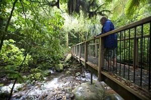Pirongia Bush Walk, Mt Pirongia, Waikato, NZ