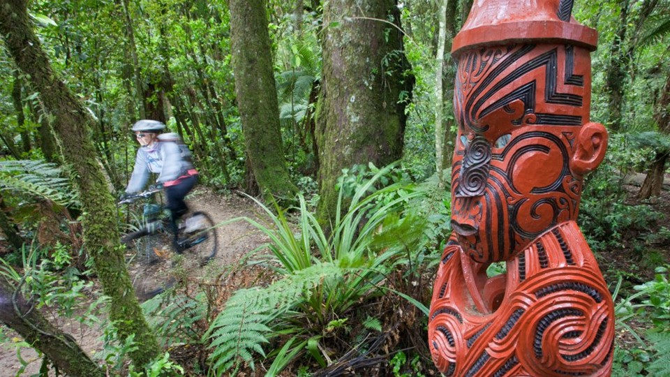 The Timber Trail, Cycling, Waitomo, NZ