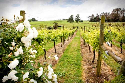 Vilagrad Winery, Hamilton, New Zealand
