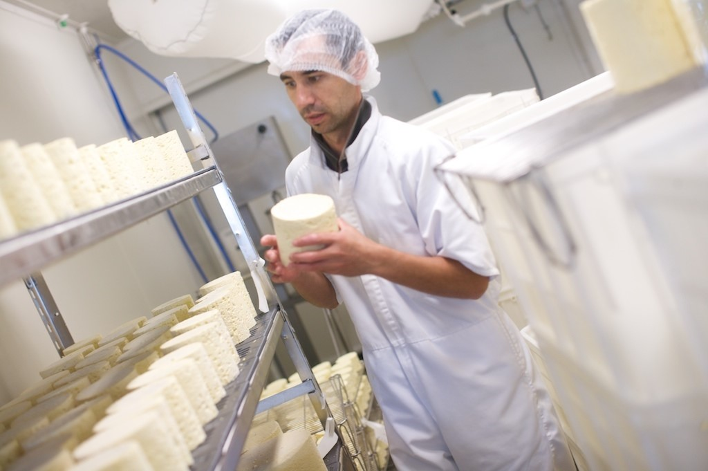Kaimai Cheese, Waikato, NZ