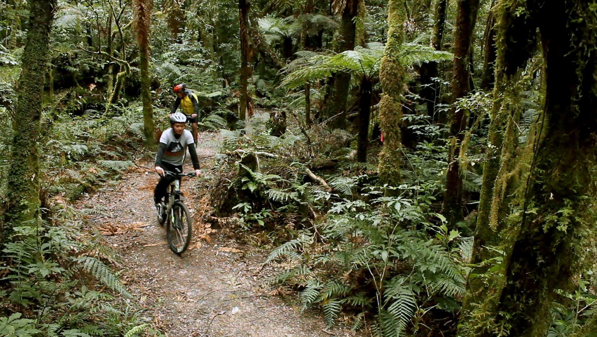 The Timber Trail, Pureora Forest Park, Waitomo, New Zealand
