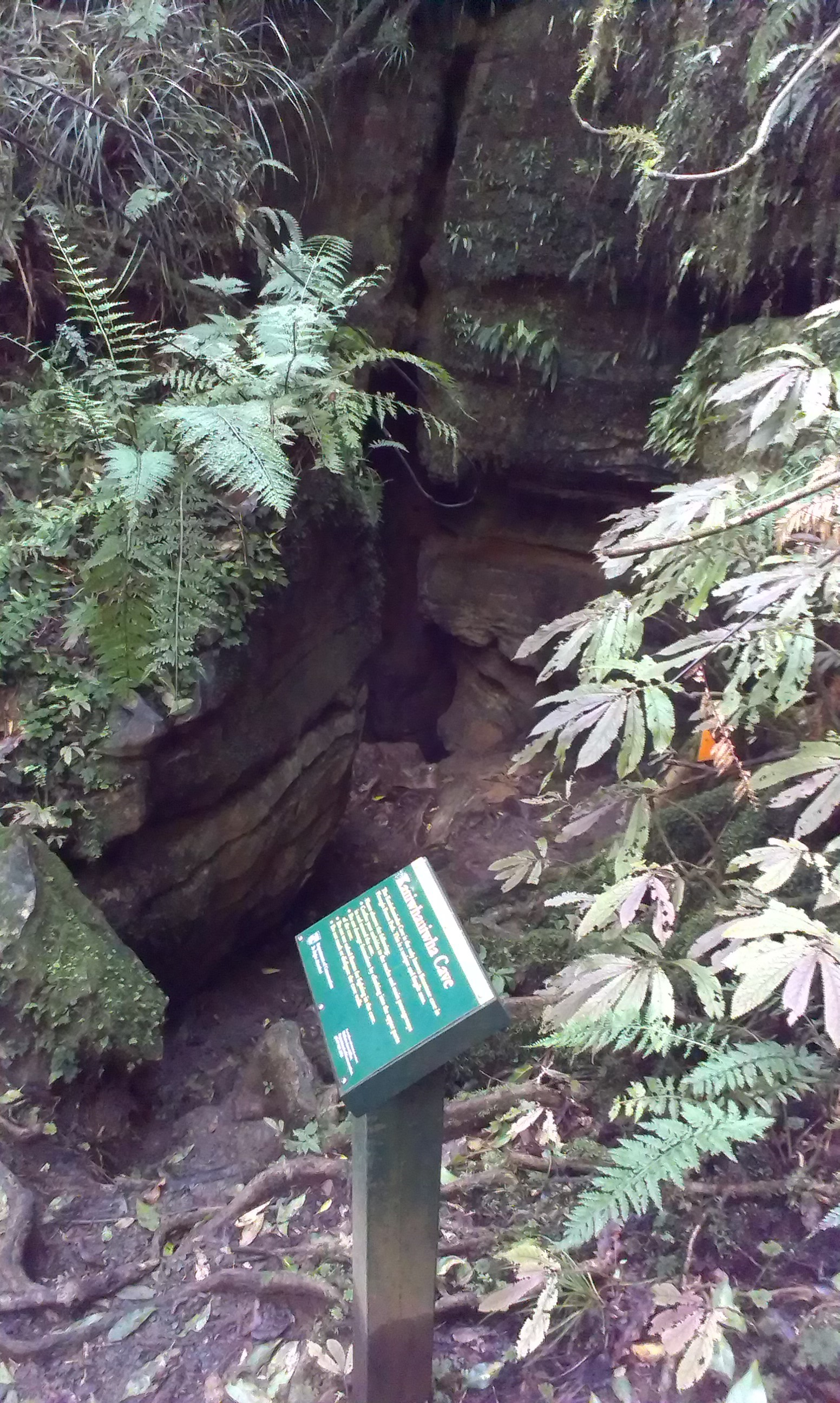 Kaniwhaniwha Cave Walk, Mt Pirongia