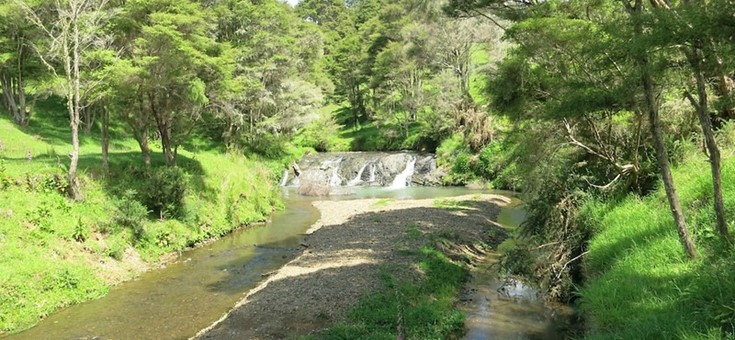 Karakariki Track Walking Trail, Hamilton