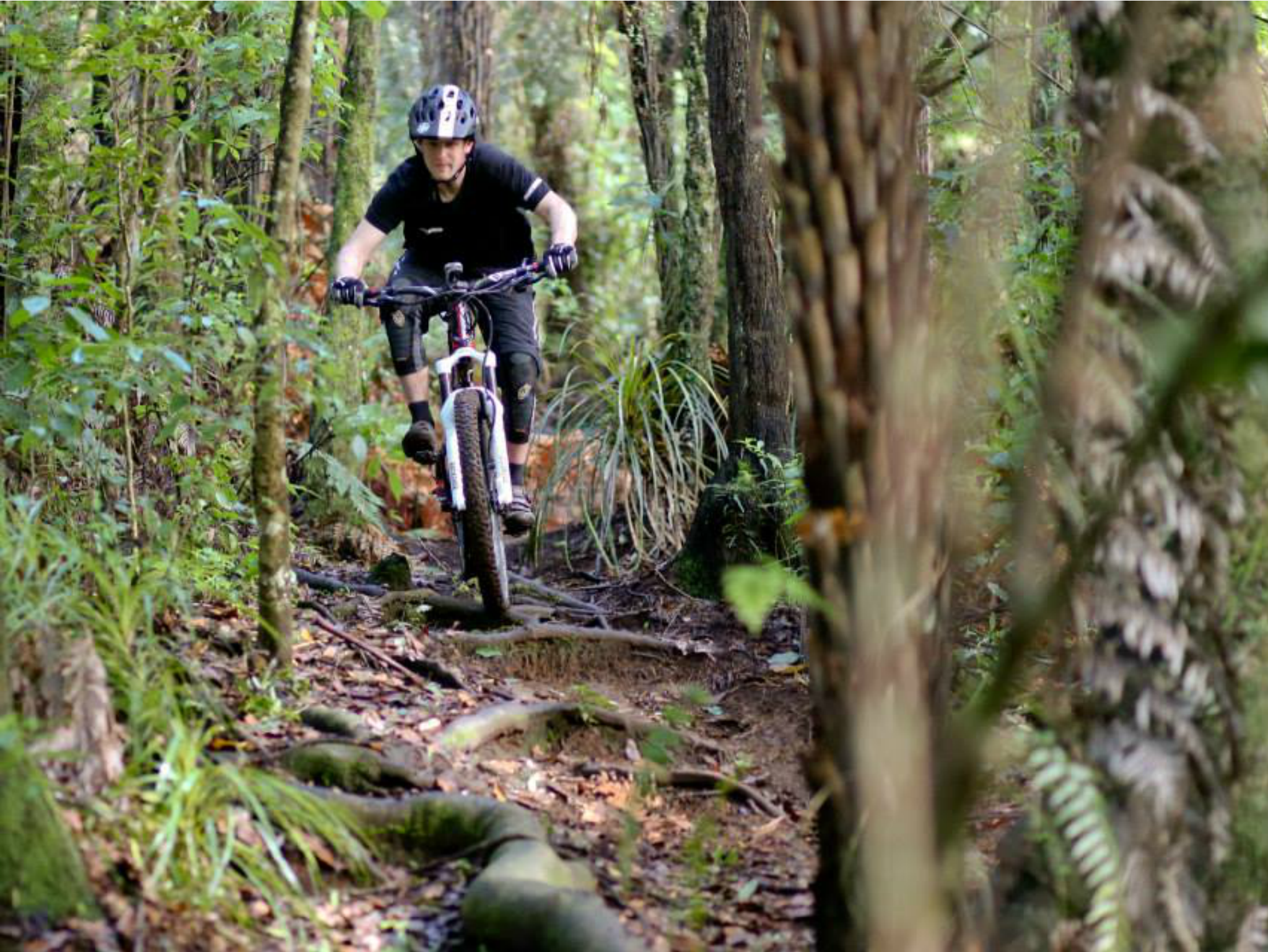 Te Miro Mountain Bike Park