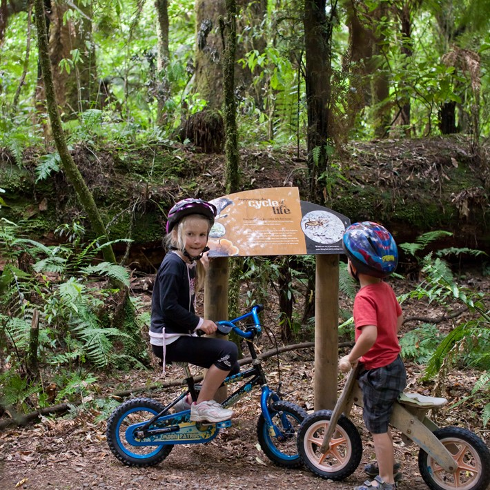 The Timber Trail Cycleway, Waitomo, NZ