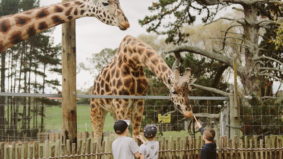 Kids with giraffes at Hamilton Zoo, Hamilton, Waikato