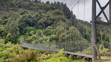 Swingbridge on the Timber Trail