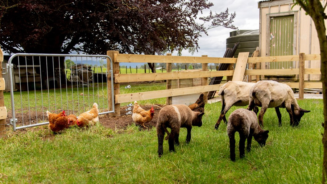 At Villa Walton we offer plenty of farm animals for you to enjoy such as our friendly pet sheep and chickens.