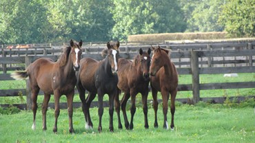 Yearlings