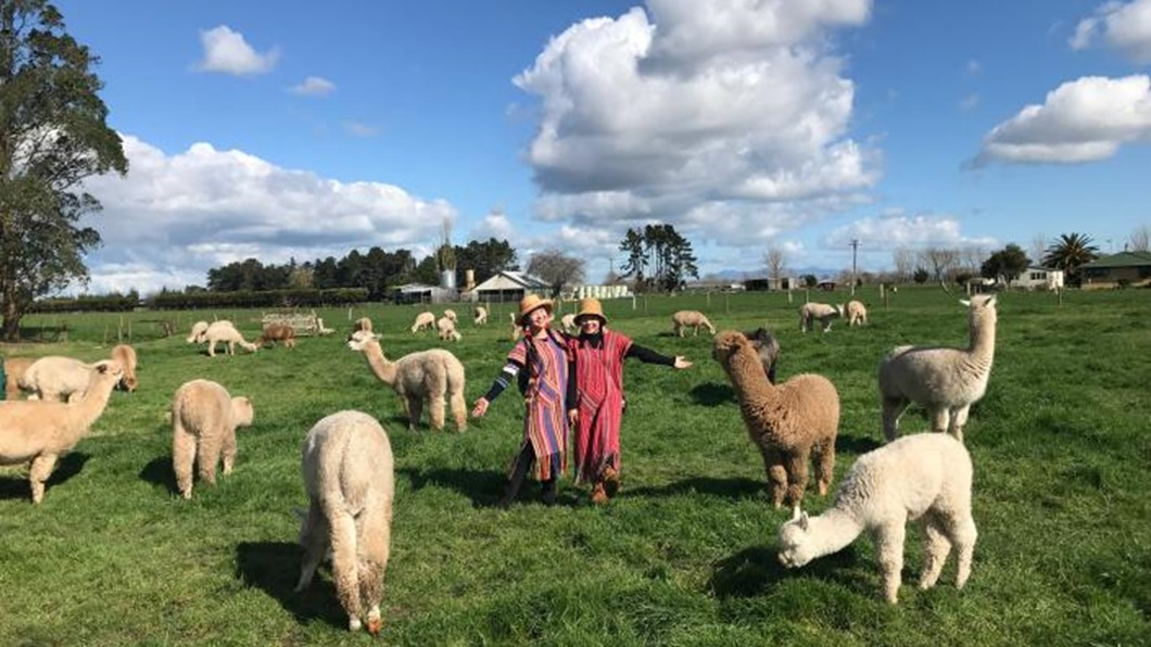Cornerstone Alpaca Tours are fun and an experience our guests will treasure forever!